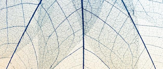 Lay flat de textura de hojas transparentes