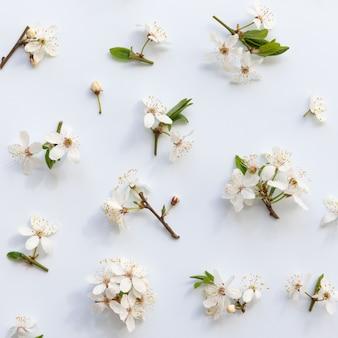 Lay plano de ramitas de cerezo silvestre con hojas jóvenes de color verde, inflorescencia con brotes y flores sobre fondo azul claro