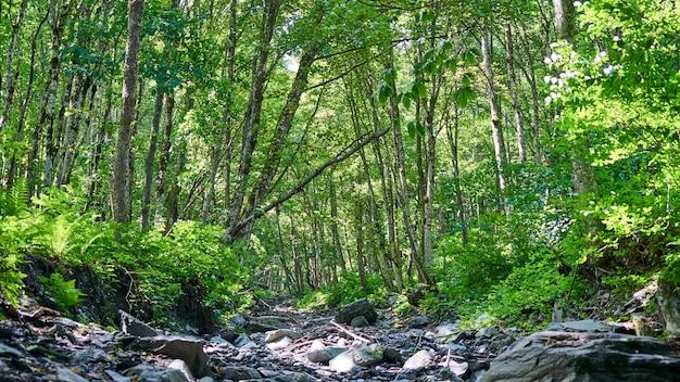 Lecho de piedra del río en el bosque, verano en sochi, rusia