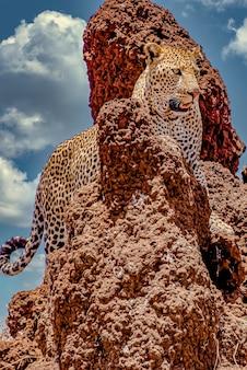 Leopardo africano subiendo un acantilado rocoso bajo un cielo nublado