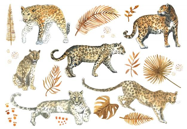 Leopardo, jaguar gato animal conjunto con hojas doradas tropicales