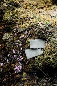 Los letreros en blanco yacen sobre piedras cubiertas de musgo y pasto verde rodeado de hermosas flores cerca