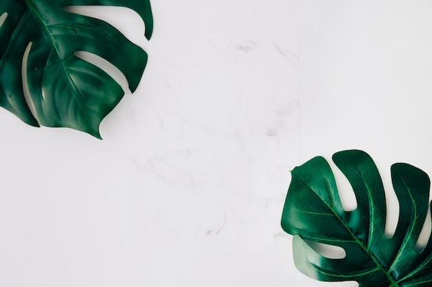 Libro blanco en blanco y hojas verdes de monstera sobre fondo blanco