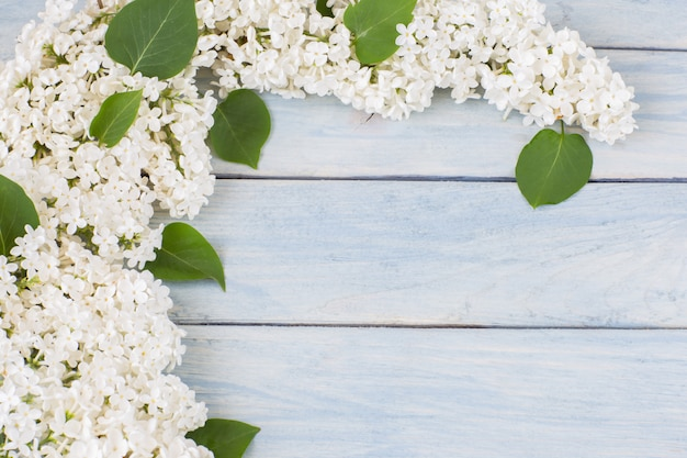Lila blanca sobre fondo de madera azul