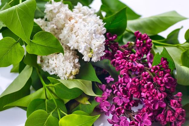 Lila púrpura hermosa sobre fondo blanco de madera