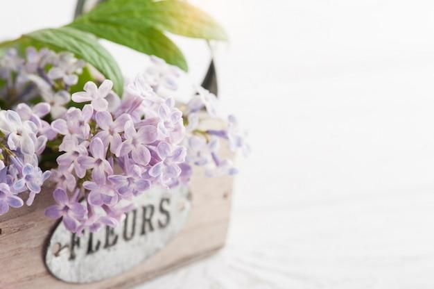 Lilas flores en caja closeup