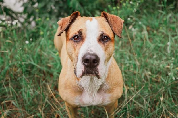 Linda cara de un perro en la hierba verde