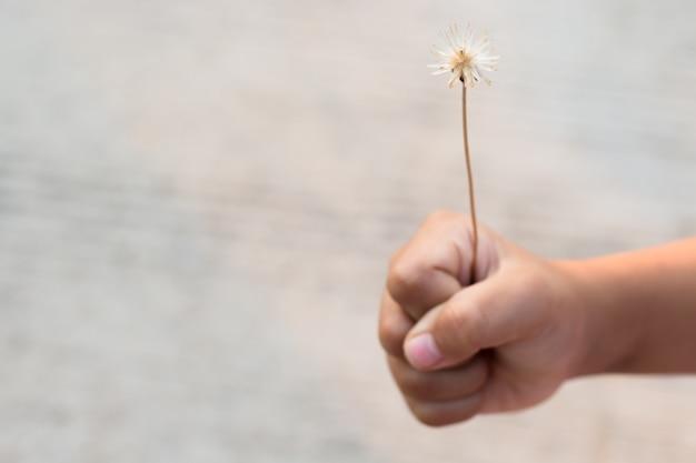 Linda hierba de flores en mi mano en estilo vintage, imagen de enfoque borroso