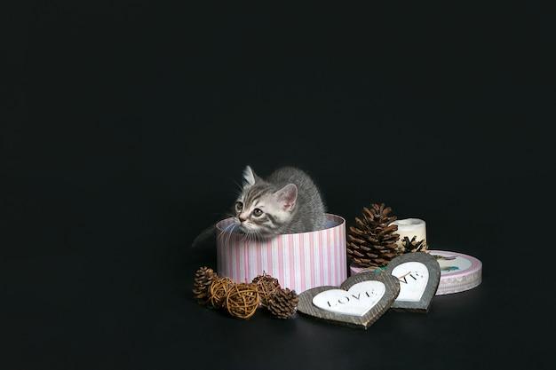 Linda mascota pequeño gatito en una caja de regalo en una pared negra.