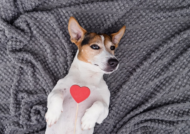 Linda mascota perro joven con corazón rojo