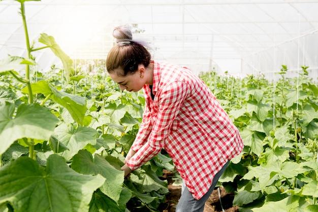 Linda mujer agricultora en invernadero trabajando