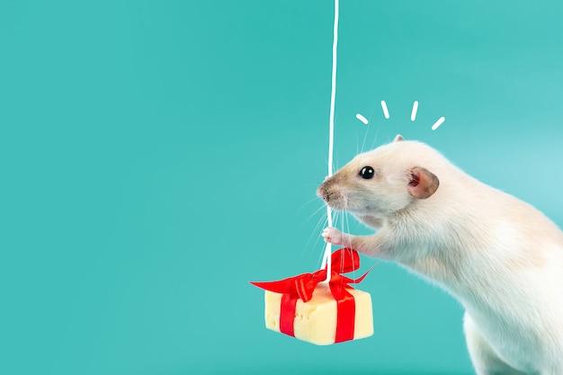 Linda rata decorativa con regalo de queso y lazo rojo
