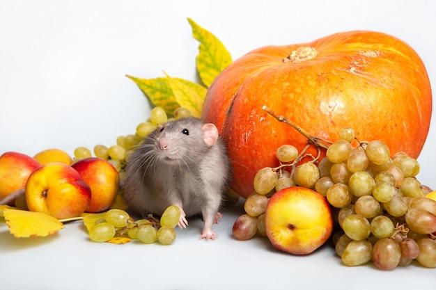 Linda rata dumbo con frutas y verduras. uvas, calabaza, nectarinas. rata - un símbolo del año nuevo chino