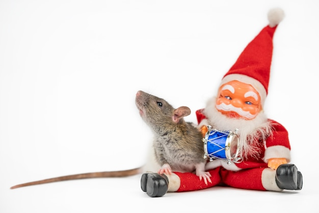 Linda rata gris sobre blanco con aislante de santa claus