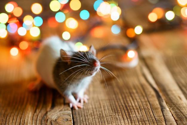 Linda rata sobre fondo de madera hermoso bokeh