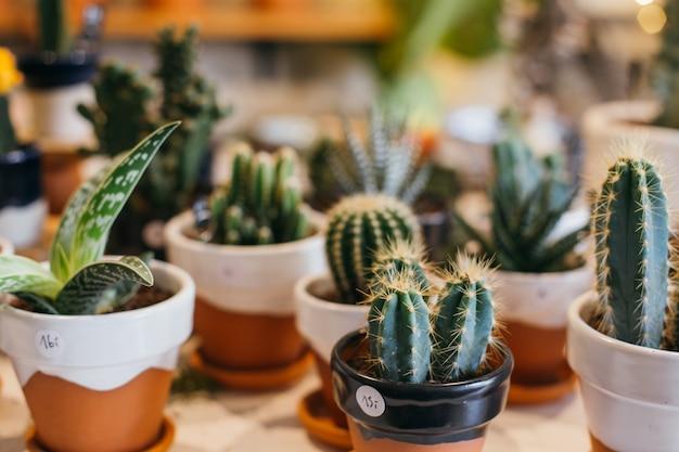 Lindas y bonitas suculentas y cactus en macetas de arcilla hechas a mano a la venta en floristería de plantas o tienda conceptual.