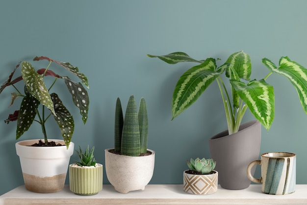 Lindas plantas pequeñas en un estante