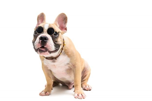 Lindo bulldog francés con gafas y sentado