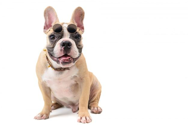Lindo bulldog francés llevar gafas y sentado