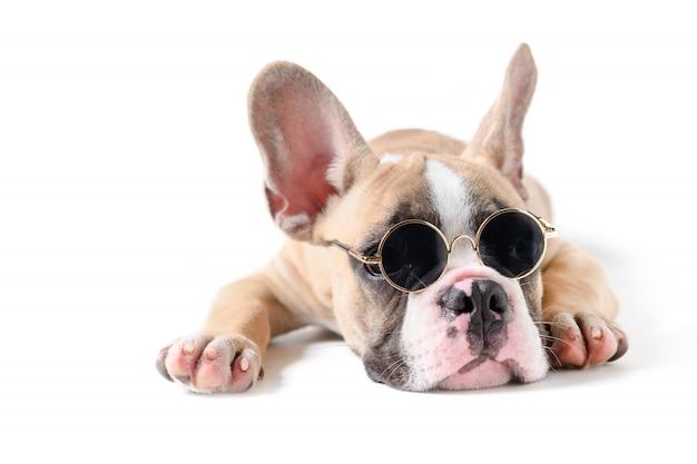 Lindo bulldog francés llevar gafas de sol y dormir