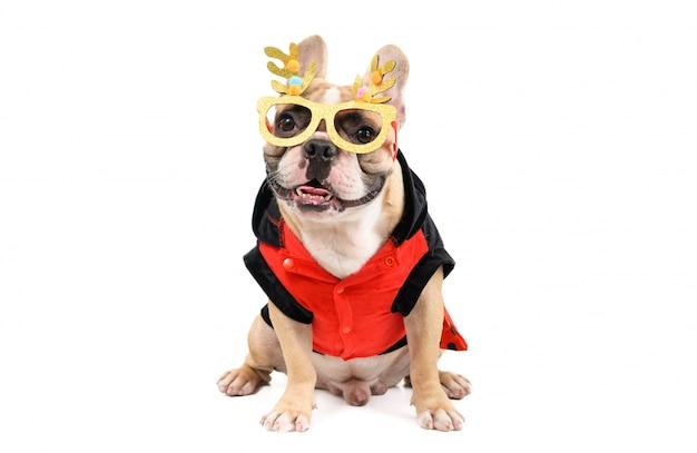 Lindo bulldog francés usa gafas elegantes y se sienta aislado en blanco