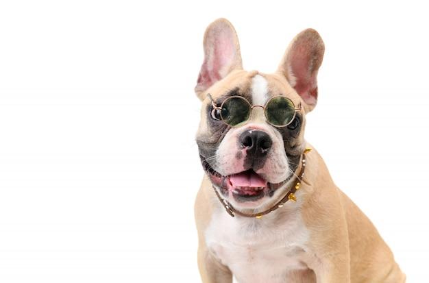 Lindo bulldog francés usa gafas y sonríe