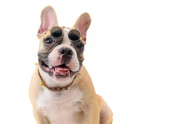 Lindo bulldog francés usar gafas y sentado aislado