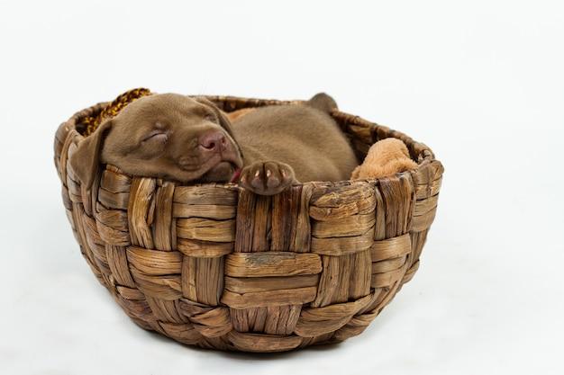 Lindo cachorro durmiendo en una canasta de mimbre