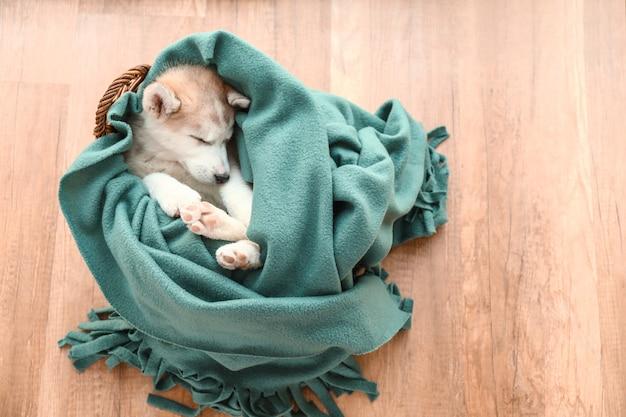 Lindo cachorro de husky durmiendo en casa