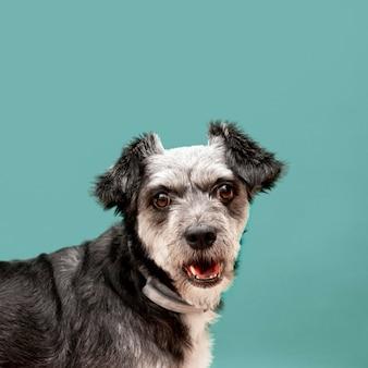 Lindo cachorro de raza mixta con espacio de copia