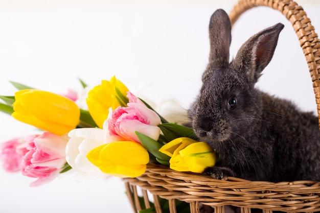 Lindo conejo gris sentado en una canasta con coloridas flores de tulipanes