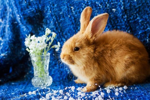 Lindo conejo de jengibre esponjoso en una manta de punto azul con un ramo de flores