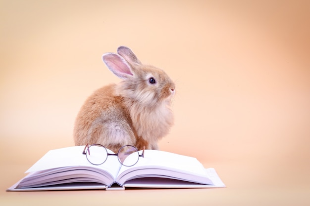 Lindo conejo sentado en un libro blanco con gafas colocadas. pascua vacaciones
