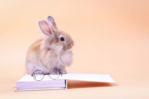 Lindo conejo sentado en el libro blanco con gafas colocadas