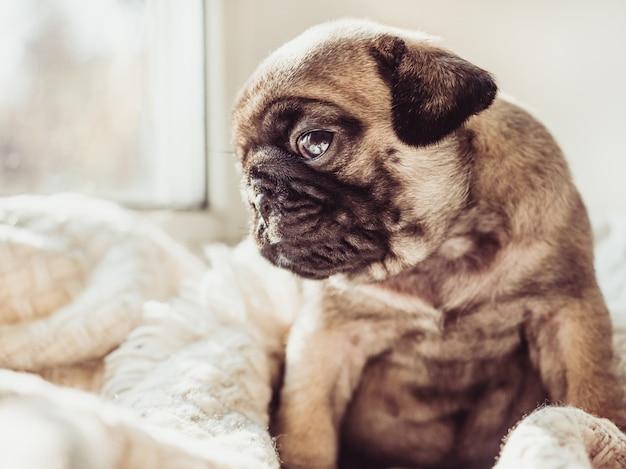Lindo, dulce cachorro sentado en una manta blanca