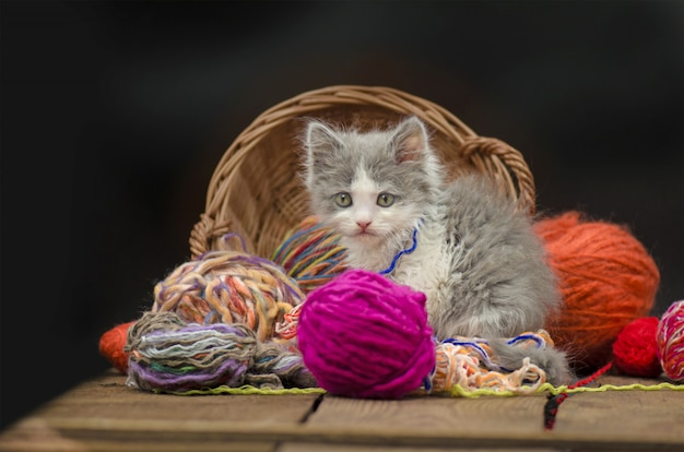 Lindo gatito con accesorios de punto. gatito mirando al espectador