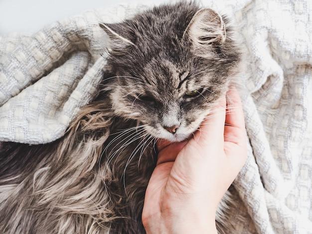 Lindo gatito acostado en manos femeninas