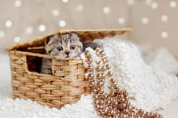 Un lindo gatito atigrado se asoma de una canasta de mimbre, con sus canastas colgando cuentas doradas. tarjeta de navidad, vacaciones, regalo. concepto de navidad y año nuevo