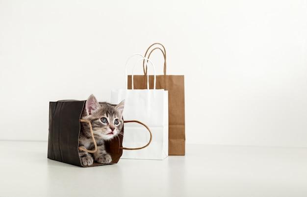 Lindo gatito atigrado se esconde en la bolsa de papel. gato en el lado de la bolsa de entrega. venta de compras en concepto de compra de día de san valentín con espacio de copia sobre fondo blanco.
