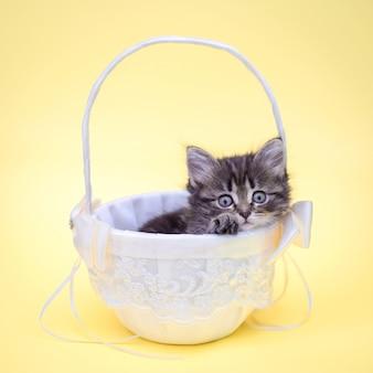 Lindo gatito en una canasta blanca