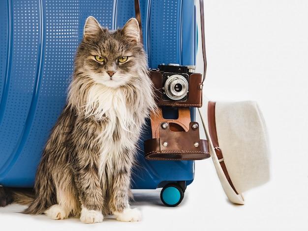Lindo gatito, elegante maleta, sombrero y cámara.