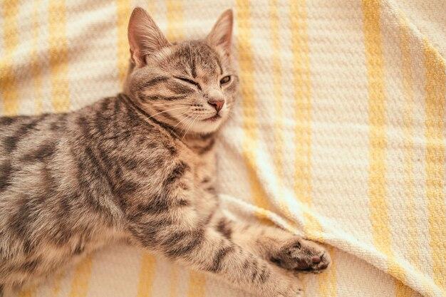 Lindo gatito gris rayado duerme en el sofá cubierto con una manta de punto blanco brillante gar ...