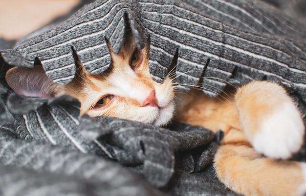 Lindo gatito jengibre durmiendo en una manta gris