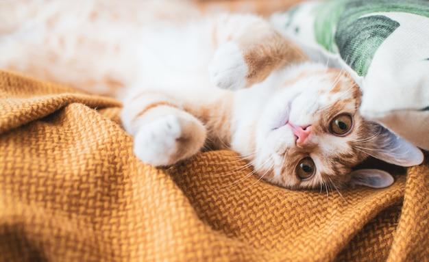 Lindo gatito jengibre durmiendo en una manta, tiempo de relajación