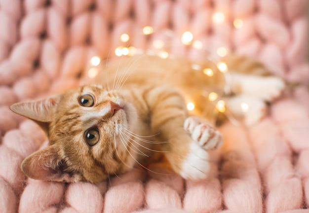 Lindo gatito de jengibre que pone en una suave manta de punto gigante de lana merina de color rosa pastel