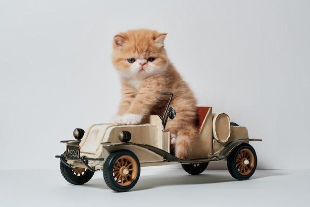 Lindo gatito jugando con un auto de juguete