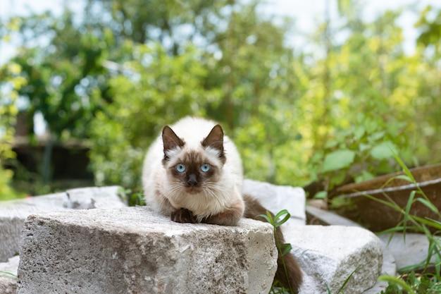 Lindo gatito con ojos azules se sienta en la hierba verde
