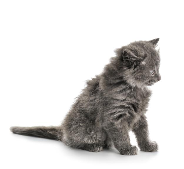 Lindo gatito en superficie blanca