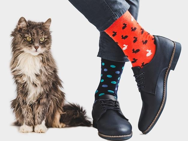 Lindo gatito, zapatos elegantes y calcetines brillantes.
