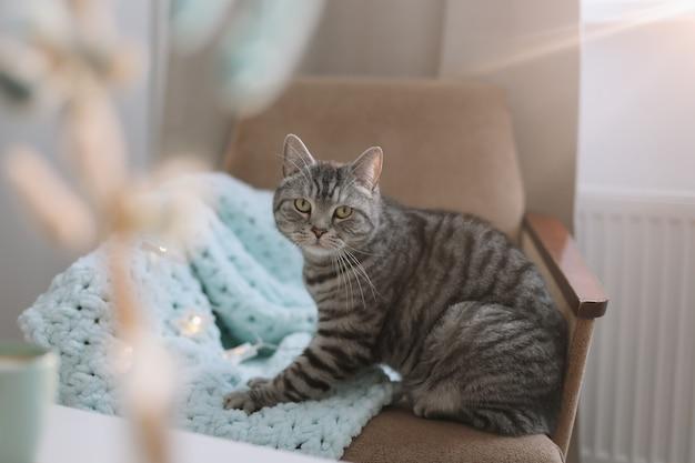 Lindo gato en un acogedor interior de casa